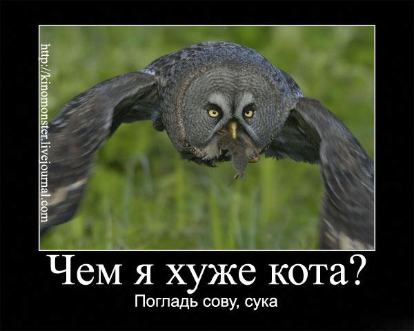 Savka - JLOX